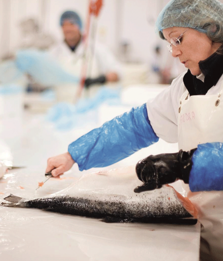 Productiemedewerker Marine Harvest Pieters